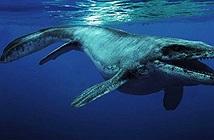 Thủy quái 85 triệu năm tuổi được tìm thấy ở Mỹ