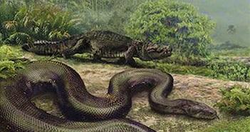 Mãng xà cổ đại khổng lồ nặng 1,5 tấn đang sống ở rừng Amazon?