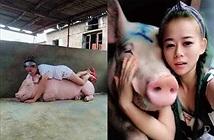 Cô gái kiếm bộn tiền nhờ... hô hấp nhân tạo cho lợn