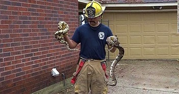 Kịch tính giải cứu 100 con rắn bên trong ngôi nhà cháy