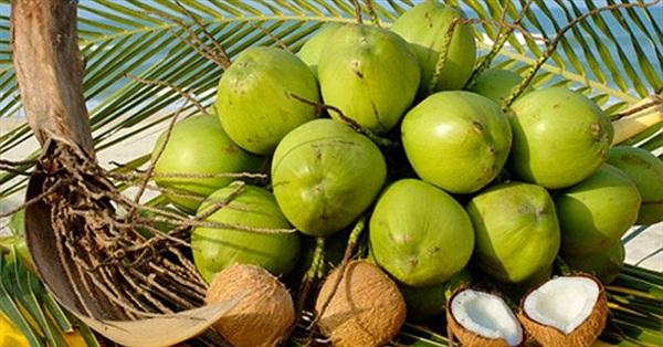 15 lý do để uống nước dừa