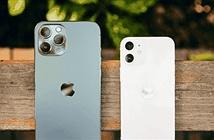 Sản lượng iPhone tăng thêm 30% trong nửa đầu năm 2021?