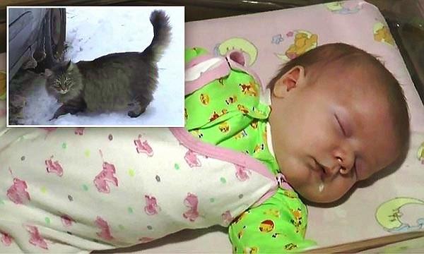 Cảm động cảnh mèo cứu sống trẻ bị bỏ rơi trong tuyết