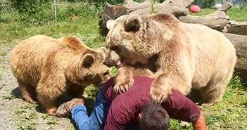 Sự thật phía sau bức ảnh người đàn ông bị gấu vồ kinh dị