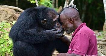 Tại sao con người không nhiều lông như tinh tinh hay khỉ đột?