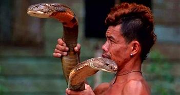 Hổ mang chúa dài 4 mét ốm nặng khi cắn phải dị nhân Indonesia