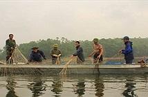 Hy vọng tìm thêm một số cá thể rùa Hồ Gươm