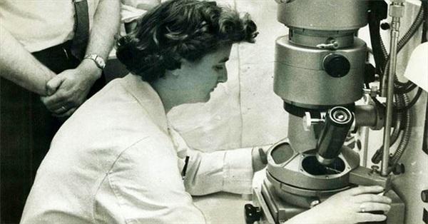 Người phụ nữ phát hiện virus corona đầu tiên trên cơ thể người vào năm 1964