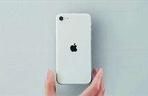 iPhone SE 2020: màn hình 4.7 inch, chip iPhone 11 Pro Max, giá đặt hàng tại Việt Nam dưới 11 triệu