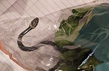 Phát hiện thấy rắn độc trong túi rau diếp được mua từ siêu thị