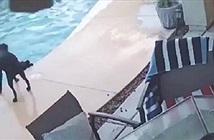 Chó nhảy xuống hồ bơi cứu bạn đuối nước như trong phim