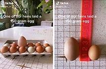 Đập quả trứng to hơn bình thường, cô gái thảng thốt vì cảnh tượng lạ