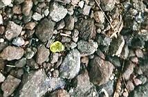 Hiện tượng lạ lùng: Đang đi đường mưa đá quý ào ào rớt xuống