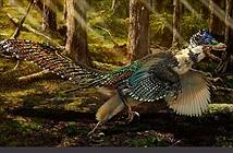 Trung Quốc: Phát hiện khủng long có lông vũ lớn nhất từng tồn tại