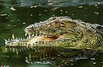 Phát hiện choáng sau chiếc mõm dị của cá sấu khổng lồ