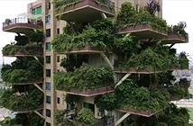 Khu rừng thẳng đứng ở Trung Quốc bị muỗi xâm chiếm