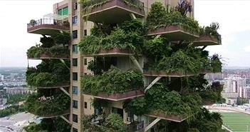 """""""Khu rừng thẳng đứng"""" ở Trung Quốc bị muỗi xâm chiếm"""