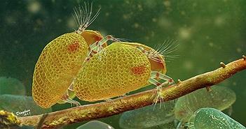 Tìm thấy hổ phách 100 triệu năm tuổi chứa mẫu vật tôm hạt hiếm