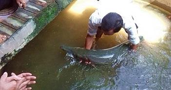 Chuyên gia cảnh báo chuyện cá sấu hỏa tiễn liên tục xuất hiện