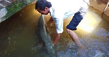 Bắt được cá sấu 28 kg ở... trong nhà