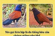 Điều bất ngờ ít biết về loài chim có thể giữ nhà thay chó