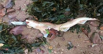 Hình ảnh đau lòng nữa về ô nhiễm rác nhựa: Cá mập chết khi đang ngậm vỏ chai nước
