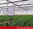 VNPT Technology xây dựng giải pháp thông minh hỗ trợ ngành nông nghiệp