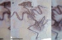 Hóa thạch nguyên vẹn sau 120 triệu năm hé lộ bí mất bất ngờ về động vật thời tiền sử