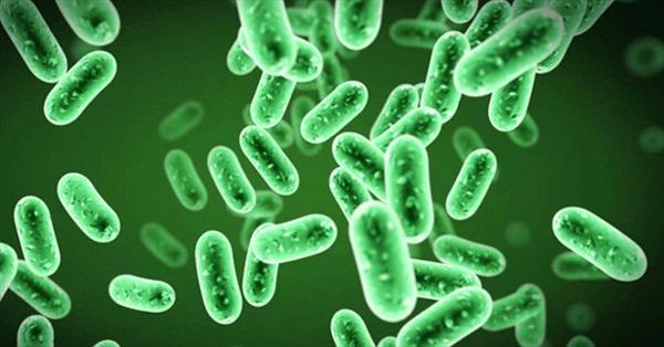 Tại sao con người không thể giẫm chết vi khuẩn?