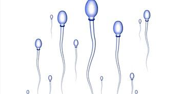 Công nghệ sản xuất tinh trùng và trứng nhân tạo đã chín muồi