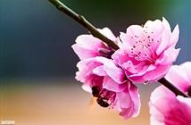 Chụp hoa đẹp ngày Tết