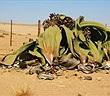 Khám phá những loài thực vật độc đáo trên thế giới