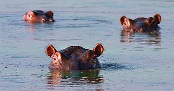 Thủ phạm thải phân khiến cá sông châu Phi chết ngạt