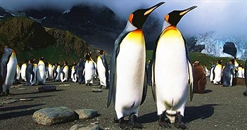 """Nhà khoa học """"say""""vì khí cười trong phân chim cánh cụt"""