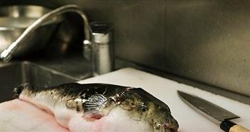 Thứ cá có độc chết người nhưng trở thành món đặc sản ở Nhật Bản