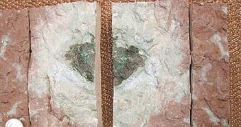 Mảnh thiên thạch chưa từng thấy trong lịch sử được phát hiện tại một mỏ đá vôi