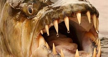 Chuyện kinh khiếp về thủy quái rắc nỗi kinh hoàng dưới nước