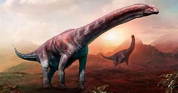 Đây chính là loài khủng long lớn nhất từng tồn tại trên Trái đất