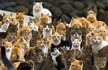 Úc sẽ diệt 2 triệu con mèo hoang trong 5 năm tới