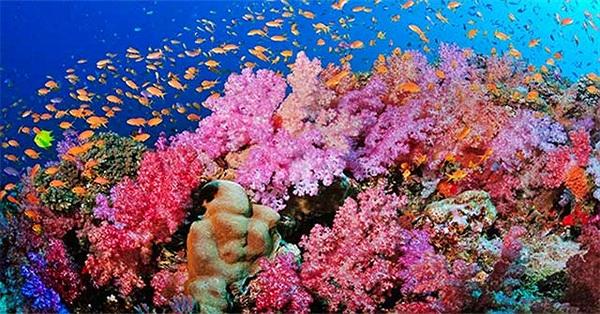 San hô là thực vật hay động vật?