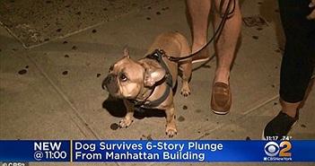 Chú chó chạy một mạch lên nóc nhà 6 tầng rồi nhảy xuống
