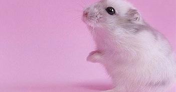 Nhật Bản thành công trong chọn giới tính cho chuột thụ tinh nhân tạo