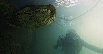 Kinh hoàng cảnh thợ lặn chạm mặt loài trăn lớn nhất thế giới dưới nước