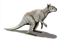 Loài Kangaroo mặt ngắn tũn, to lớn dị thường