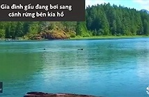 Video: Gấu con đuối nước, hoảng loạn gọi mẹ