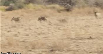 Video: Tránh linh cẩu, báo hoa mai phải chen chúc trên cây lánh nạn và cái kết