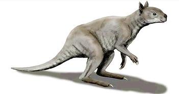 Kangaroo thời cổ đại: Xương hàm cứng như thép có thể xẻ đôi thân cây lớn