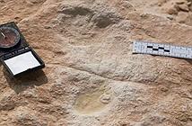Phát hiện dấu chân người có niên đại 120.000 năm tại Arab Saudi