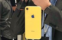 Chuyên gia phân tích nhận định Apple đang ngậm trái đắng với iPhone XR