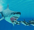 Hé lộ thủ phạm thật sự khiến cá mập khổng lồ thời tiền sử tuyệt chủng